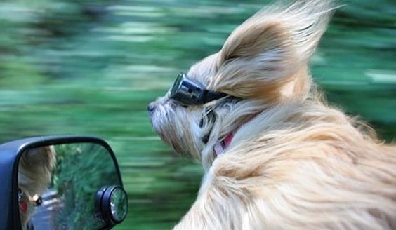 hairblowinginwind